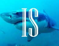 Indie Shark